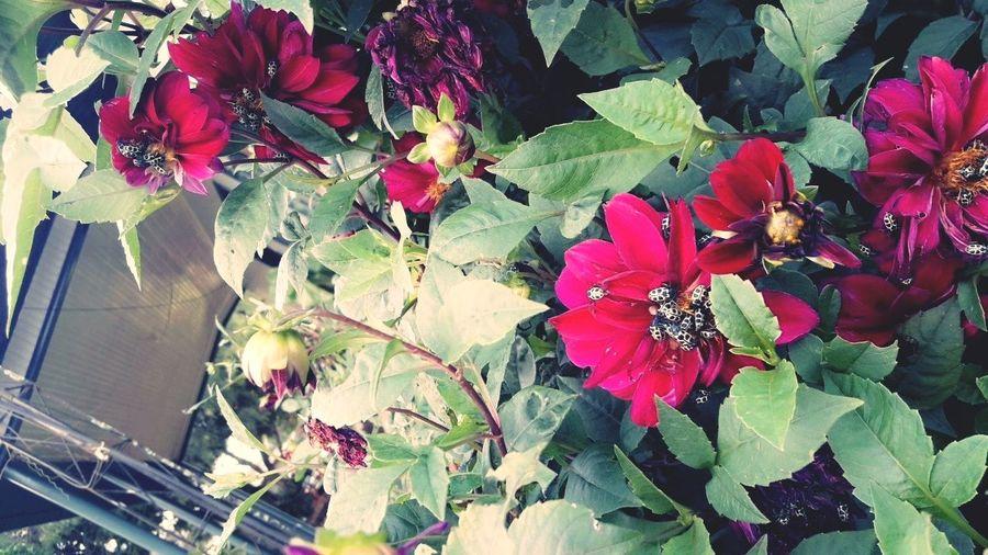 Flower 🌺🌸 Flower Head Leaf Close-up Plant