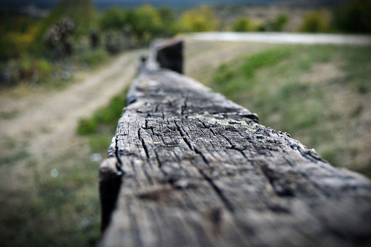 EyeEm Nature Lover Rascafria, Spain Tronco Wood Close-up Day Desenfoque Desenfoque Selectivo Focus On Foreground Madera Nature No People Outdoors Rough Selective Focus Textured  The Way Forward Tree Wood - Material EyeEmNewHere