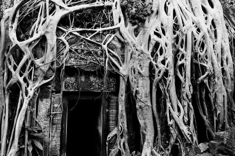 History John Nelson Doorway Worldheritage Temple Jungle Entrance Southeast Asia Cambodia Angkor Wat Tomb Raider  Reclaiming Architecture Nature Tree Ta Prohm Lines And Shapes Pattern Pieces Southeastasia