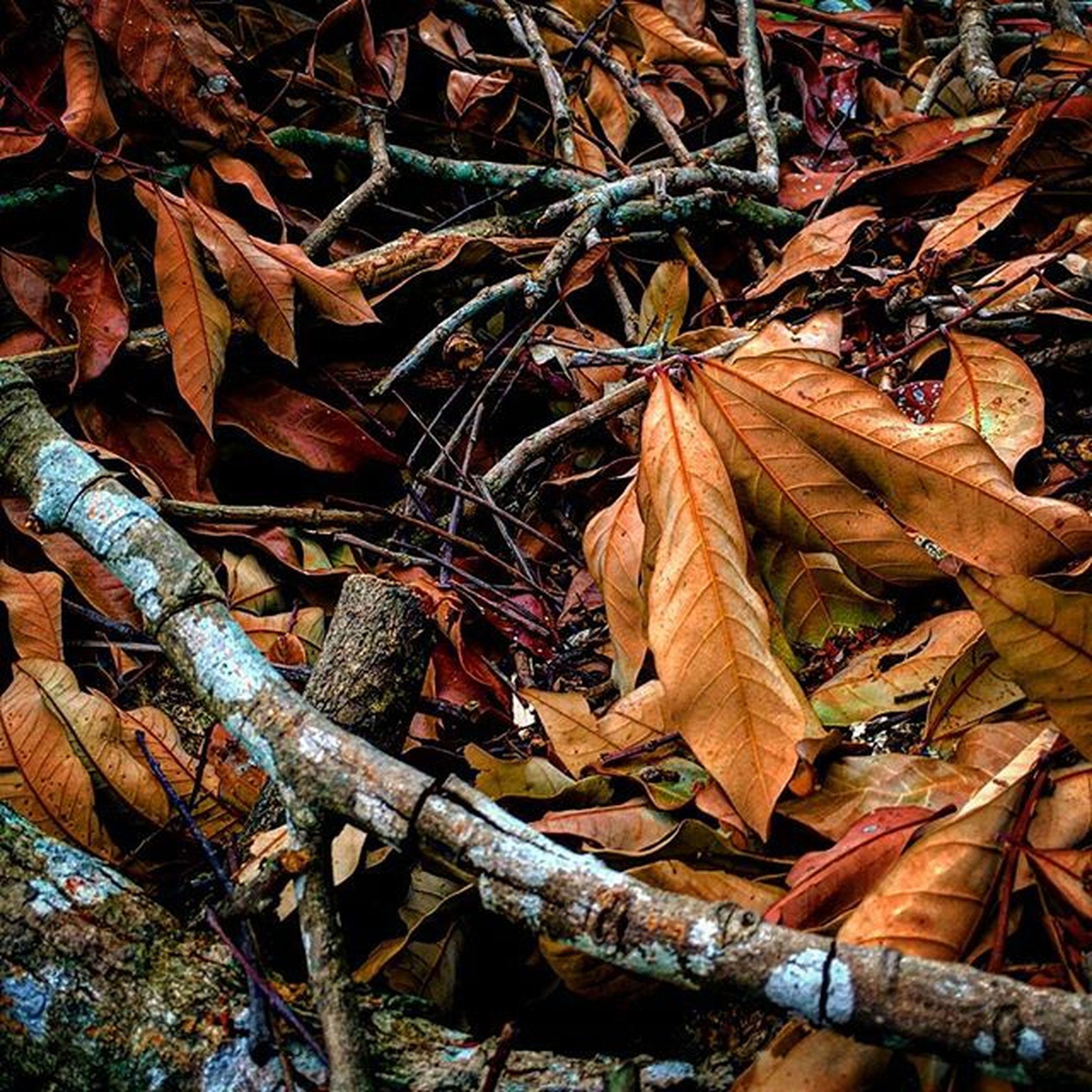 leaf, dry, autumn, change, full frame, high angle view, backgrounds, leaves, abundance, fallen, close-up, nature, brown, season, outdoors, aging process, day, wood - material, natural pattern, no people