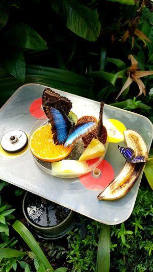 The Week On EyeEm Enjoymarketingdigital Fruit Freshness Botanical Garden Flower Fragility Butterfly Macro Butterfly Wonderland Zoo Artis  Amsterdam