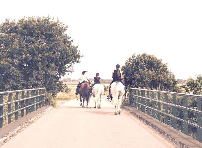 Horses Bridge Country Road Countryside Road Countrylife Horseback Riding Horse Photography  Horseriding Horseasses