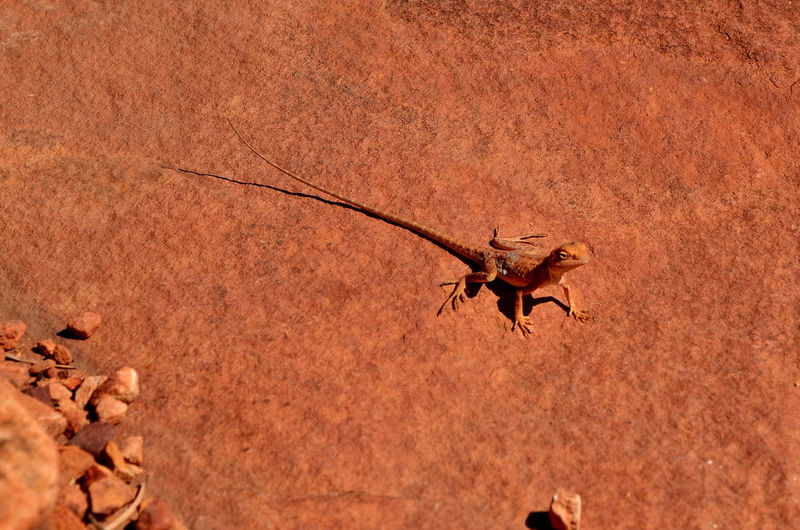 High angle view of lizard on field during sunny day