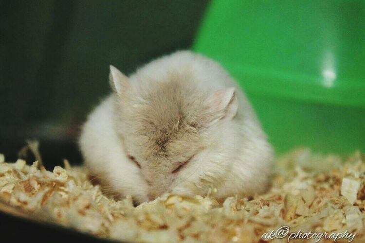 Peace ✌ Sleep Hamster 💞