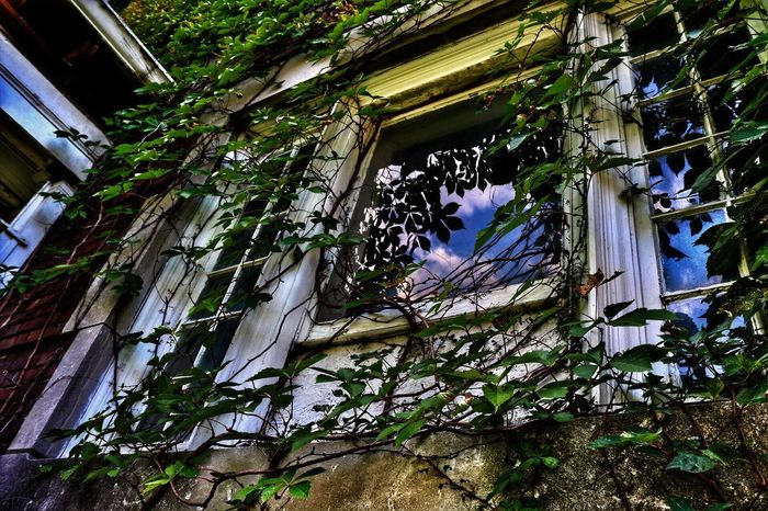 Window at historic Olivia Apartments in Joplin, Mo Canon Canonphotography Showcase July Nature Perspective Abandoned Abandoned Buildings Reflection