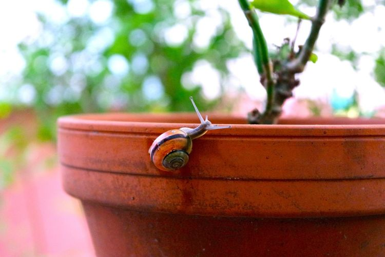 Snail Animal Themes Close-up Day Flowerpot Focus On Foreground No People Outdoors Snail🐌