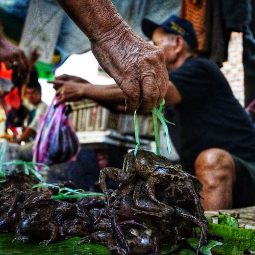 Frog dealing in traditional market. Frogs Frog Dealer Traditional Marketplace Glodok Indonesian Street (Mobile) Photographie Indonesian Photographers Collection INDONESIA Pasar Traditional Chinatown Chinatown Glodok Kota Tua Jakarta Kotatuajakarta Fresh Frog Swike Food Adult Only Men Freshness