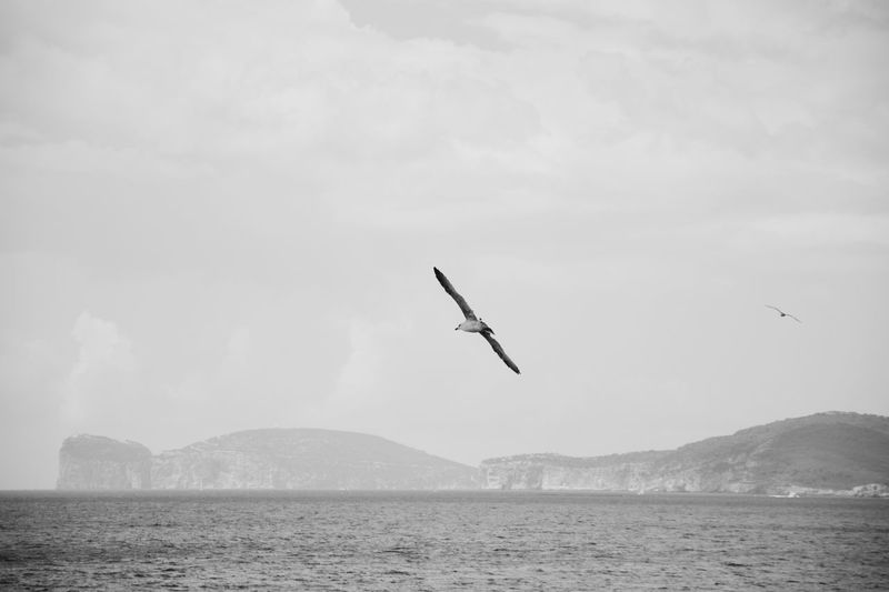 First name is Free, last one is Dom Nikon Nikon D5200 Nikonphotography Black And White Blackandwhite Monochrome Vscocam VSCO Seagulls Flying