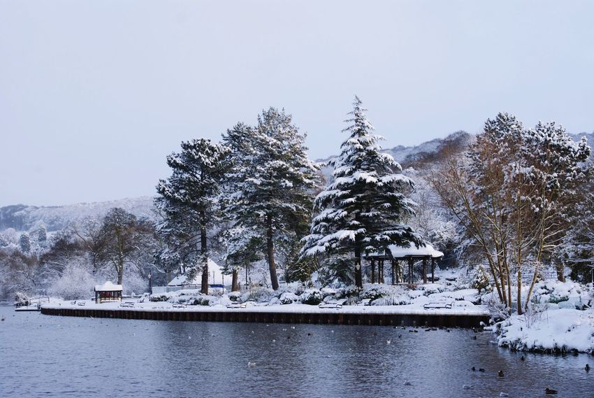 Belper River Gardens Snow Winter Cold Temperature Nature No People Tree Beauty In Nature