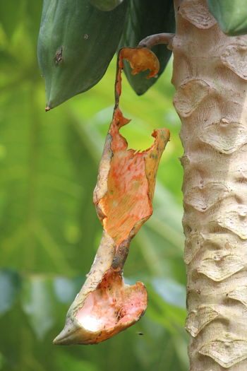 Close-up of leaf on plant against tree