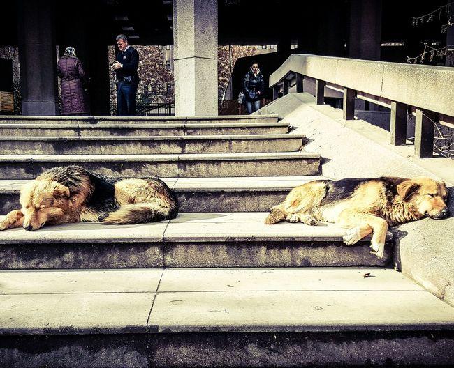Ankara Adliyesi Güneşli Bir Gün 😄❤️ Sunny Day Köpecikler Dogs