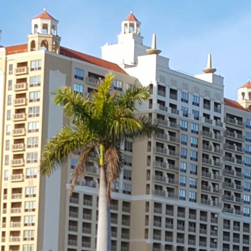 Palm tree with high rise in the background Palm Tree High Rise Building Sarasota Florida Florida Life Sunny Day
