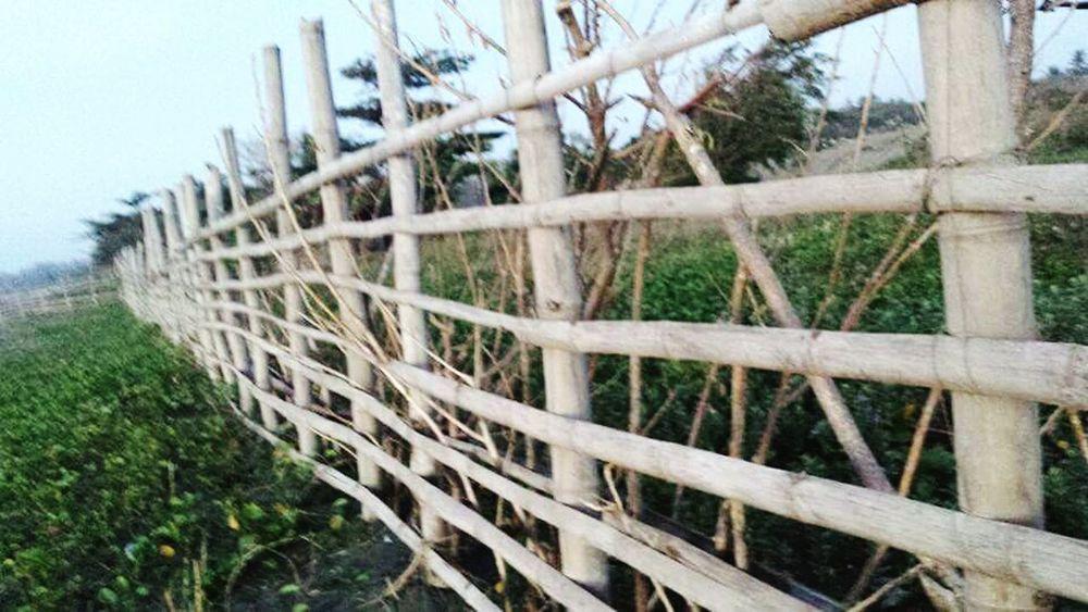 Bamboo Fence Nature Photography EyeEm Taking Photos Eye4photography