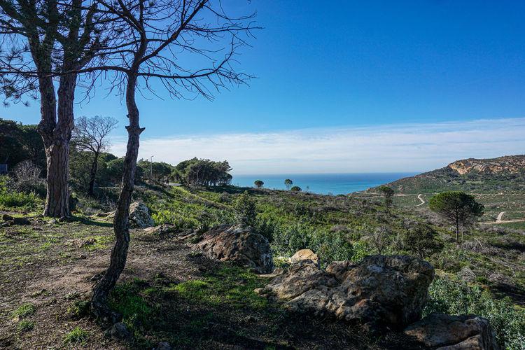Trees on rocks by sea against blue sky