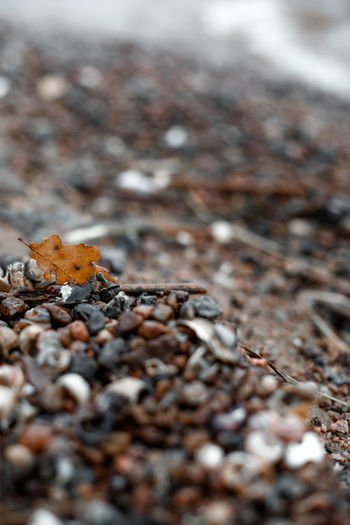 Selective Focus Day Nature Land No People Close-up Dry Beauty In Nature Field Outdoors Leaf Plant Part Falling Tranquility Plant Solid Tree Ground Rock Winter Surface Level Shell