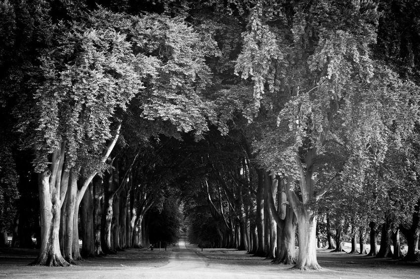 Entrance Nature Path Romantic Landscape Trees Black And White Entranceway Old Trees Park Park - Man Made Space Pathway Trees Alley Countryside Country Life Garden Garden Photography The Week On EyeEm An Eye For Travel The Great Outdoors - 2018 EyeEm Awards