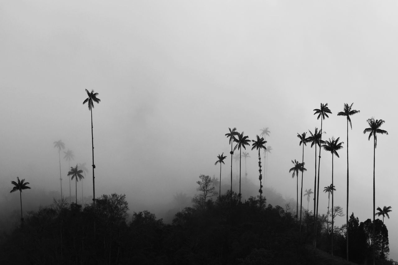 Coconut Palm Tree,  Cold Temperature,  Copy Space,  Day,  Fog