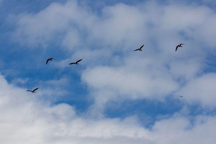 Forms of Flight Canon EOS 60D Flying Bird Vertebrate Animal Themes Animal Animal Wildlife Animals In The Wild