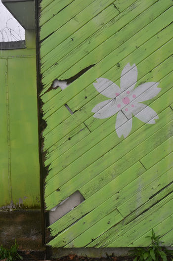 green painted wood wall of abandoned Japanese restaurant Abandoned Buildings Close-up Day Floral Pattern Green Color No People Painted Painted Flower Painted Image Painted Wood Wall