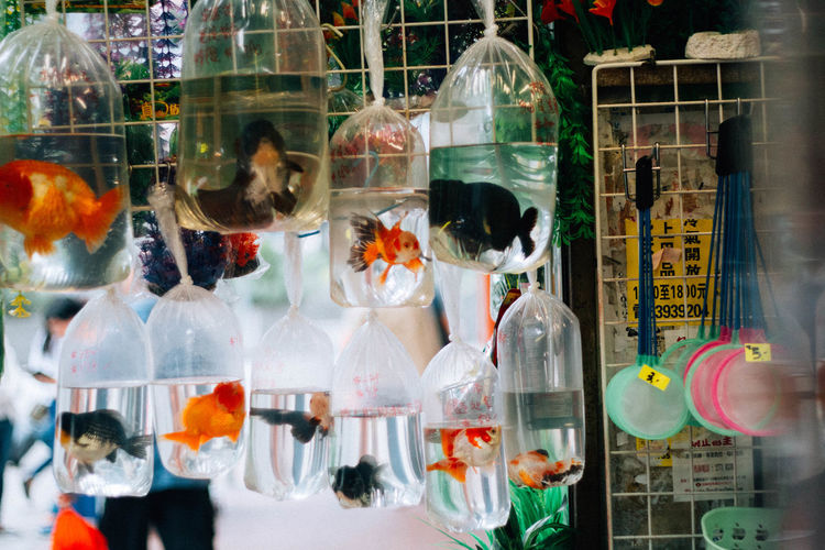 Animal Themes Animal Wildlife Animals In Captivity Aquarium Choice Close-up Day Goldfish Indoors  Large Group Of Animals Multi Colored No People Retail  Store Variation Water