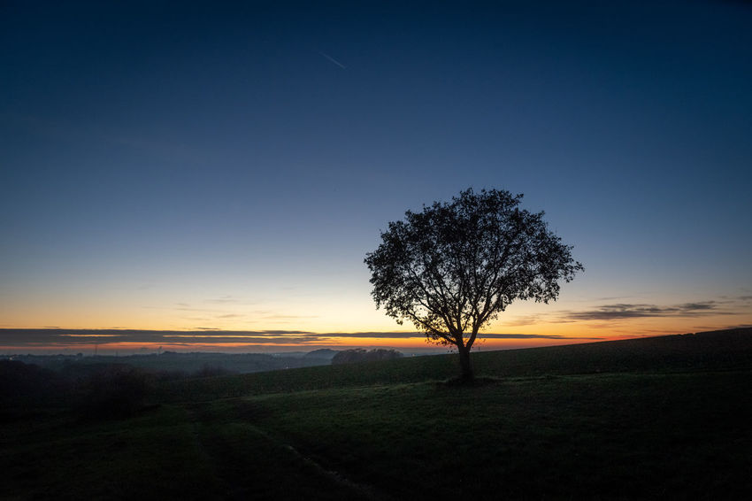Sky Tree Tranquil Scene Tranquility Beauty In Nature Environment Landscape Scenics - Nature Sunset Plant Field Land Nature Silhouette No People Non-urban Scene Growth Idyllic Orange Color Rural Scene Outdoors