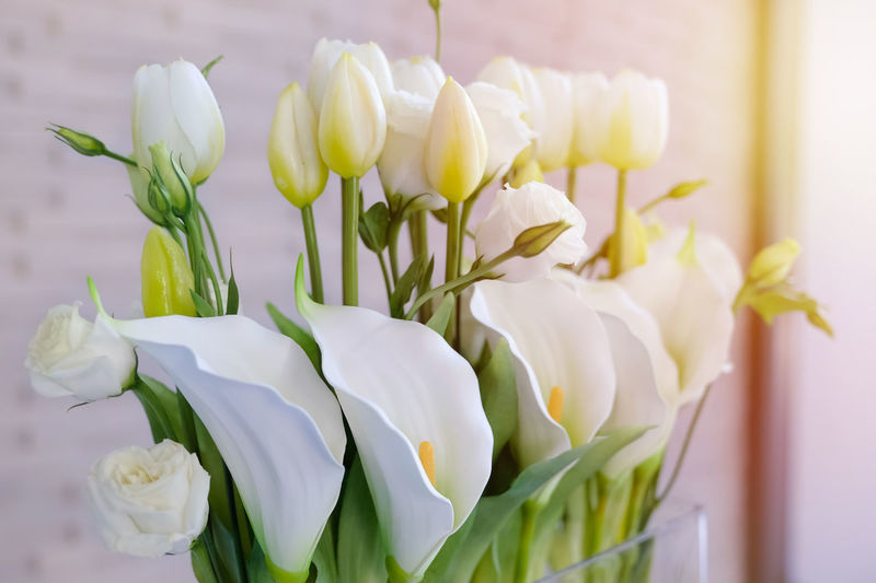 White lilies Calla in vase. Calla Lily Lily Vase Backgrounds Beauty In Nature Bouquet Bunch Of Flowers Close-up Flower Flower Arrangement Flower Head Flowering Plant Fragility Freshness Inflorescence Lilies Nature Petal Plant Softness Tulip Vase White White Color White Lily