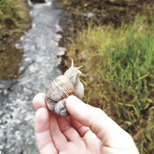 Close-up of person holding snail
