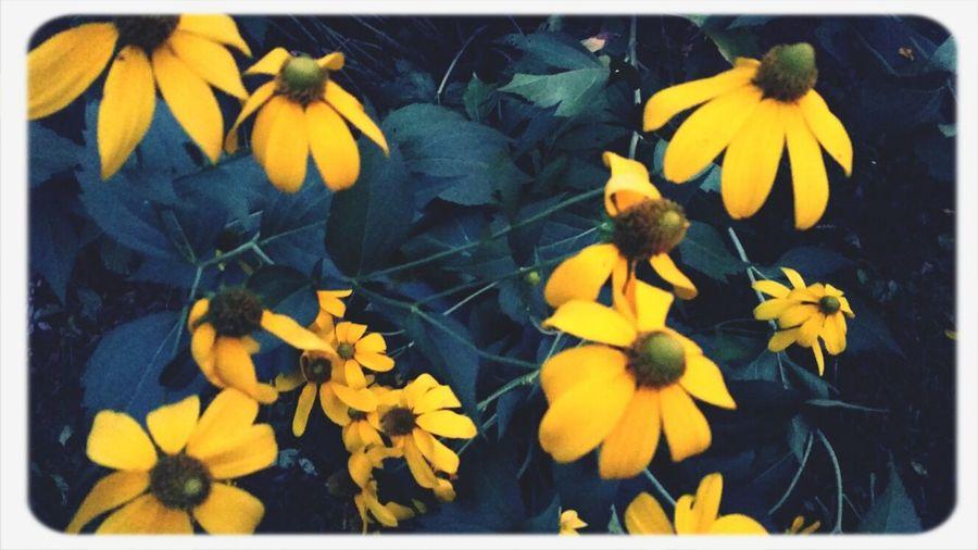 flowers before dark