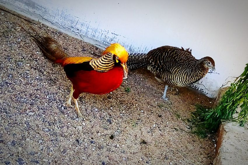 Bird Animal Themes Nature Two Birds No People Outdoors Day VadodaraZoo Vadodara Couple Couple - Relationship EyeEmNewHere EyeEm Diversity Art Is Everywhere Resist