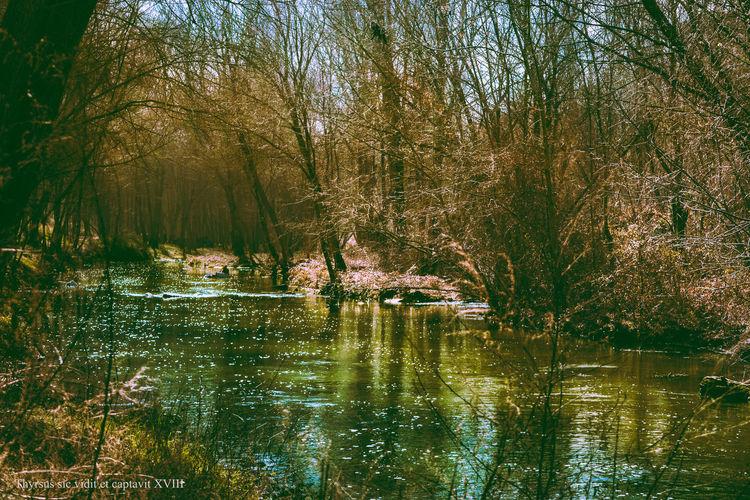Madrid Manzanares River Nature Photography Reflection Riverside SPAIN Trees Winter