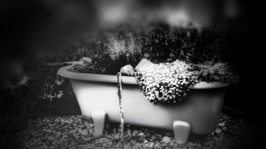 First Eyeem Photo EyeEmNewHere EyeEm Nature Lover Blackandwhite Flower Collection Softness Smartphonephotography Still Life Flower Head Outdoor Photography Blooming Blackandwhite EyeEm Selects Flower Front Or Back Yard Water Plant Domestic Garden Watering Can Potted Plant Flowerbed Planting Gardening Glove Flower Pot Gardening Equipment Gardening Succulent Plant My Best Photo