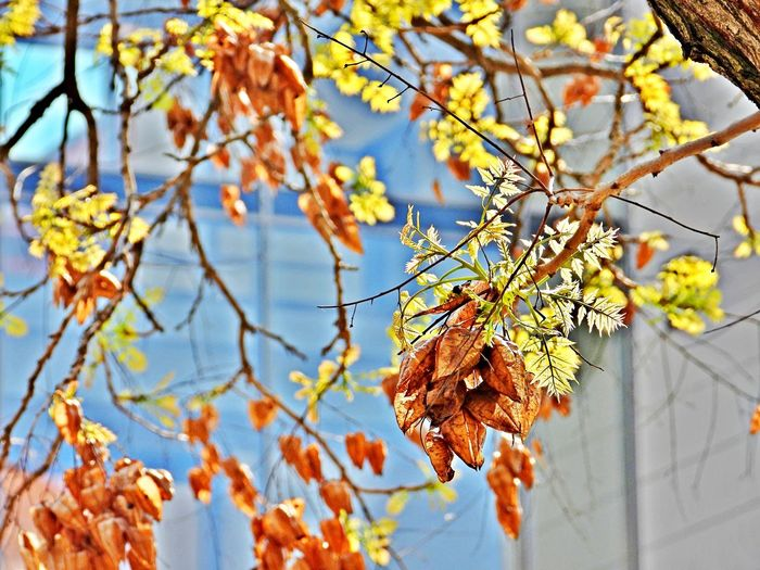 Plant Focus On Foreground Tree Branch Growth Beauty In Nature Autumn No People Low Angle View Outdoors Change Vulnerability  Leaves Close-up Full Frame Backgrounds