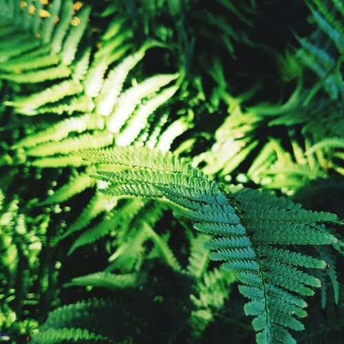 Love the green Leaf Green Color Nature Fern Close-up Growth Beauty In Nature Plant Outdoors First Eyeem Photo