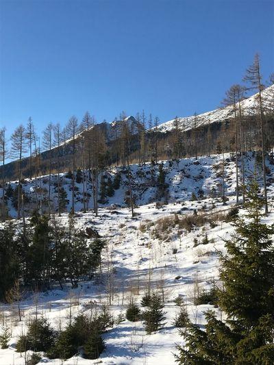 Tatras, Slovakia Mountain Mountains Ski Skiing Tatry Tatras Slovakia Snow Trees Winter Wintertime Christmastime