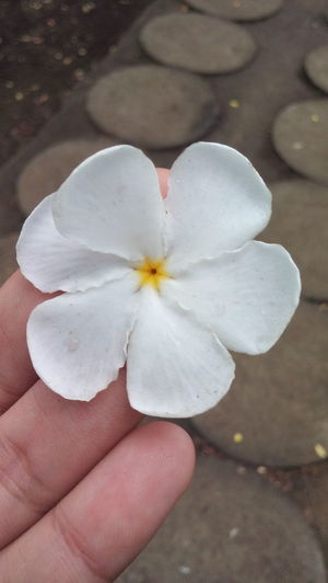 ¡Una flor para ti! A flower for you! 🌹👍😊😀 Beautifulflower  Flower Beautiful Nature EyeEm Gallery Eyem Eyemphotography Eyemcollections Flores Lindaflor Blanca White
