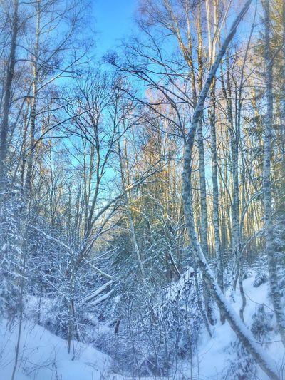 Among trees and snowflakes ❄️❄️❄️ EyeEm Nature Lover Tadaa Community January Days Vackra Dalarna Lovely Monday