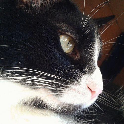 Catsofinstagram Blackandwhitecats Amazing_picturez Loki 7catdays Cats Cats_of_instagram Sunny Delight_pets Baby Excellent_cats 7petdays Kitten Katzen Bestanimal Catsofworld Pet_featuring BLackCat Photooftheday A_world_of_cats Instacat_meows Cat_features Bestcats_oftheworld Catworldwide Showcasing_pets igcatjunky ig_closeups bestmeow topcatphoto Best_IG_Petz
