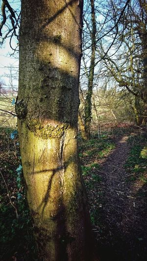 Taking Photos Nature Textures Nature On Your Doorstep Tree Branches Nature The Greatest Artist EeYem Best Shots Beauty In Nature Shadows & Light Shadows Thewayforward Path In Nature Pathway WoodLand Woodland Walk Woodland Path Patterns In Nature