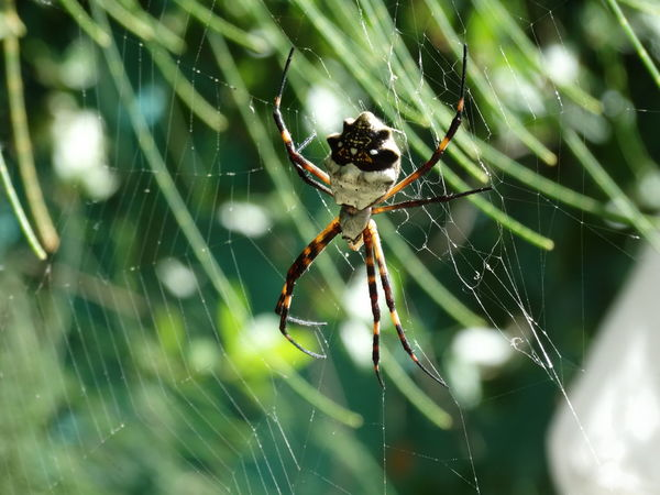 Spider Web Spider One Animal Animal Themes Nature Close-up Beauty In Nature Animals In The Wild Web Animal Wildlife Outdoors No People Fragility Spinning Insect Survival Animal Leg Complexity Day Weaving