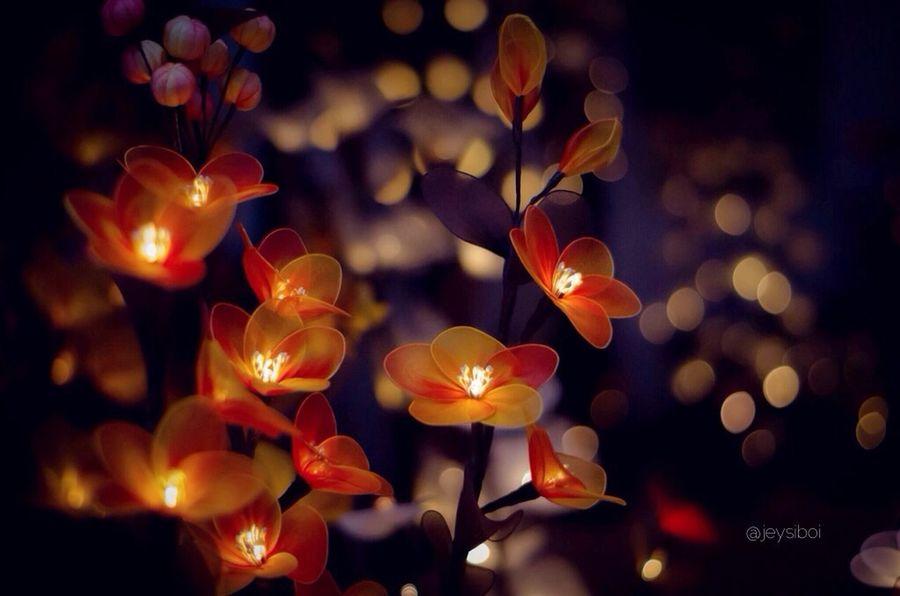 glow.. Flower Light And Shadow Love Eye4photography