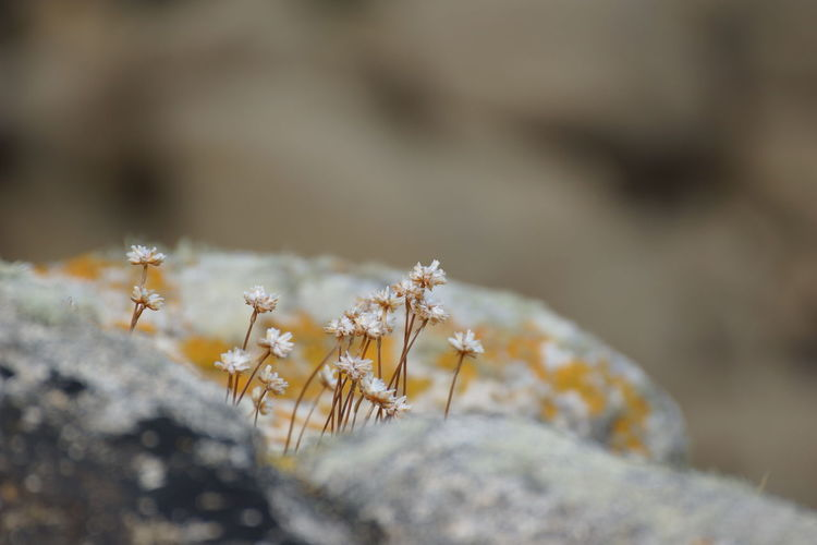 Close-up of frozen plant on rock