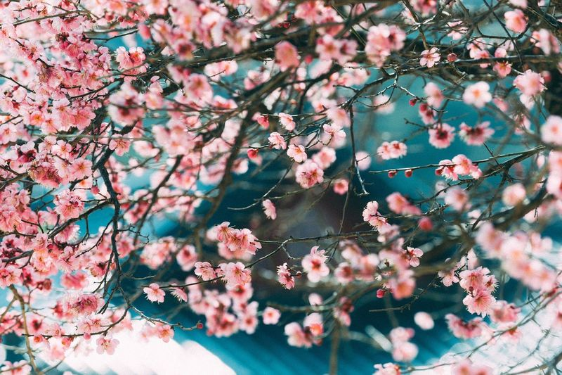 Colour Of Life Modern Travel Tranquil Scene Sky Scenics Photography Photo Nature Outdoors Korea Landscape Flower Taking Photos Daily Life Cherry Blossoms Color Colorful
