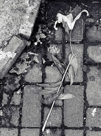 Flower Wither Street Streetphotography Sad