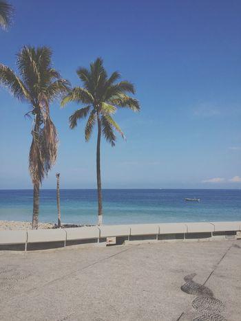 Vallarta 🌴🌊☀️ Beach Sea Palm Tree Horizon Over Water Nature Outdoors Vallarta Vallarta,Mexico Jalisco