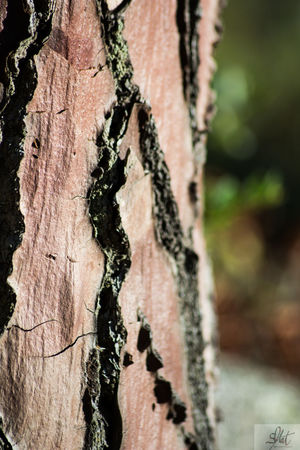 Bark Beauty In Nature Close-up Day Nature No People Outdoors Tree Tree Trunk