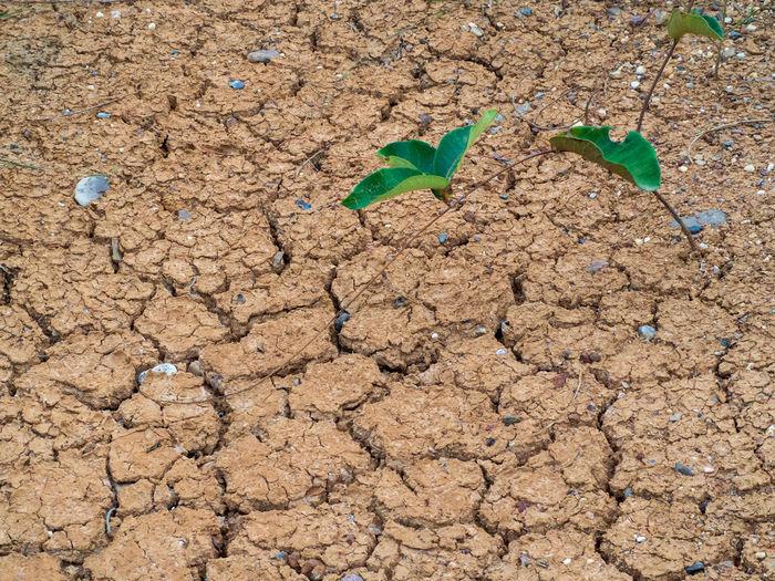 Dirt Nature