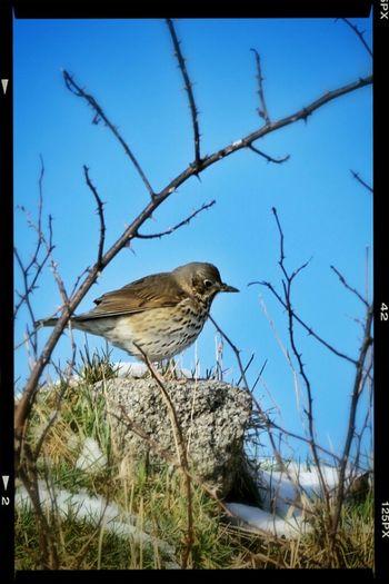 Birdwatching Birds Eye4nature