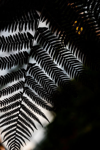 Close-up of fern leaves against building