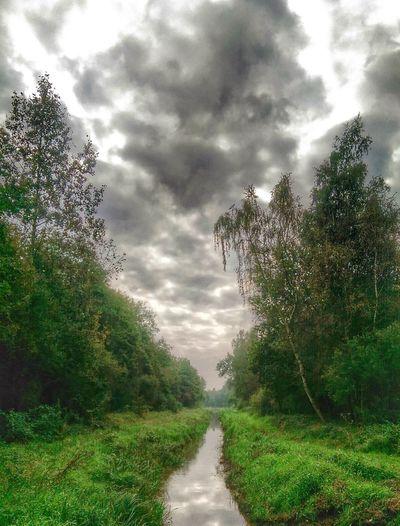 Nature HDR Hugging A Tree Landscape