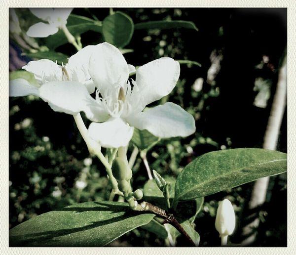 Flowers Thailand Thailand_allshots